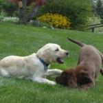 Jasper's First Play Date