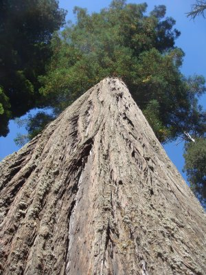 Stop Wineries from Destroying California Redwoods