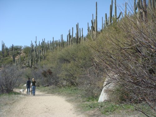 Catalina State Park - Cottonwood Trail