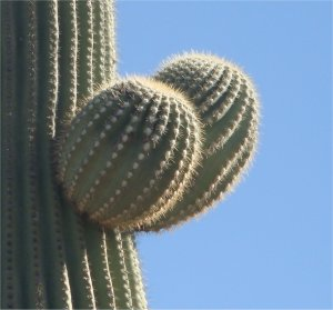 17 Things I Love About Catalina State Park