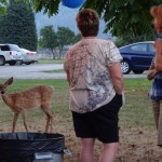 Oh Deer! Grand Forks Has a Problem