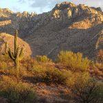 True Privilege: Snowbirding in Arizona State and Regional Parks